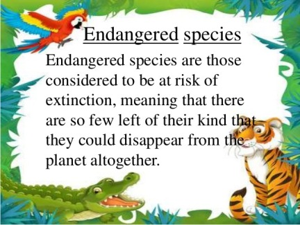 endangered species should not be protected essay Home opinions science should we protect endangered species add a new topic should we protect endangered species add a new topic add to my favorites however, animals that are naturally dying due to change in environment should not be protected.